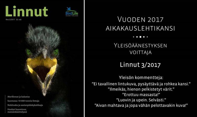 Vuoden 2017 aikakauslehtikansi: Linnut 3/2017 (kuva: Jari Peltomäki)