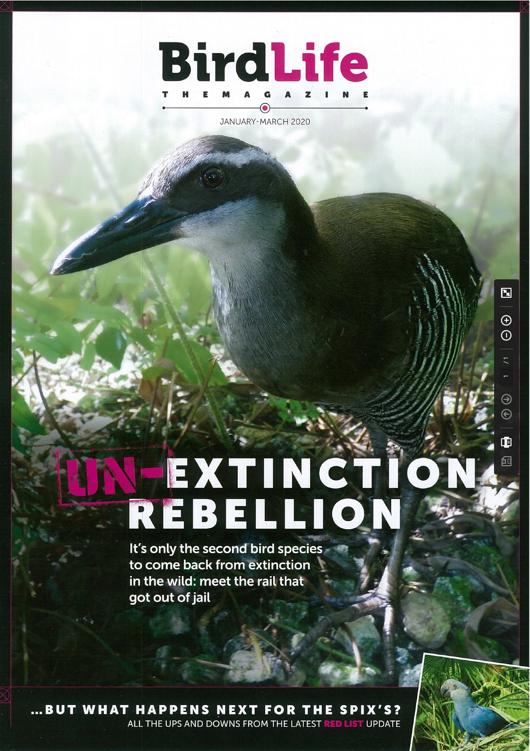 BirdLife The Magazine. january - March 2020
