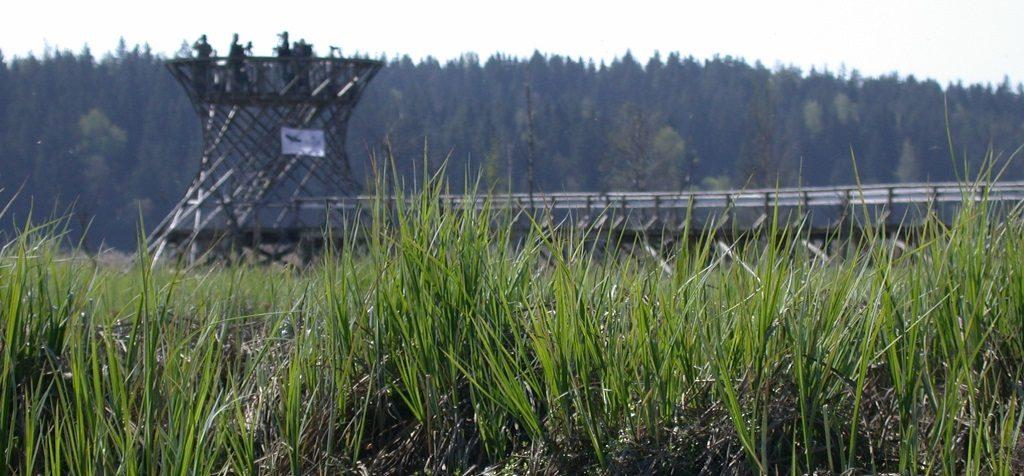 Tornien taisto 3.5.2008. Siuntio, Tjusträsk. Kuva: Jan Södersved
