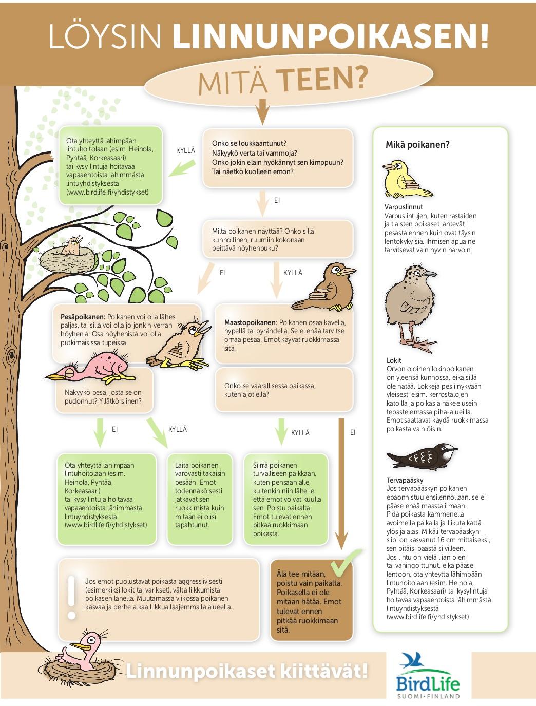 Mitä tehdä linnunpoikaselle?