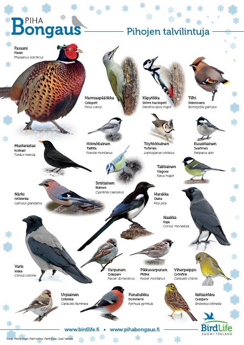BirdLife-Pihabongaus-talvilintujuliste