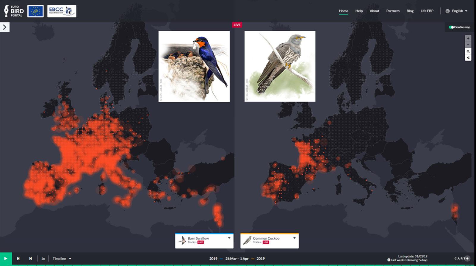 Birdlife Suomi Euroopan Lintumuuton Eteneminen Seurattavissa