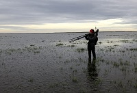 Liminganlahti, Pitkänokka, myrskytuhoja. Kuva: Clemens Küpper