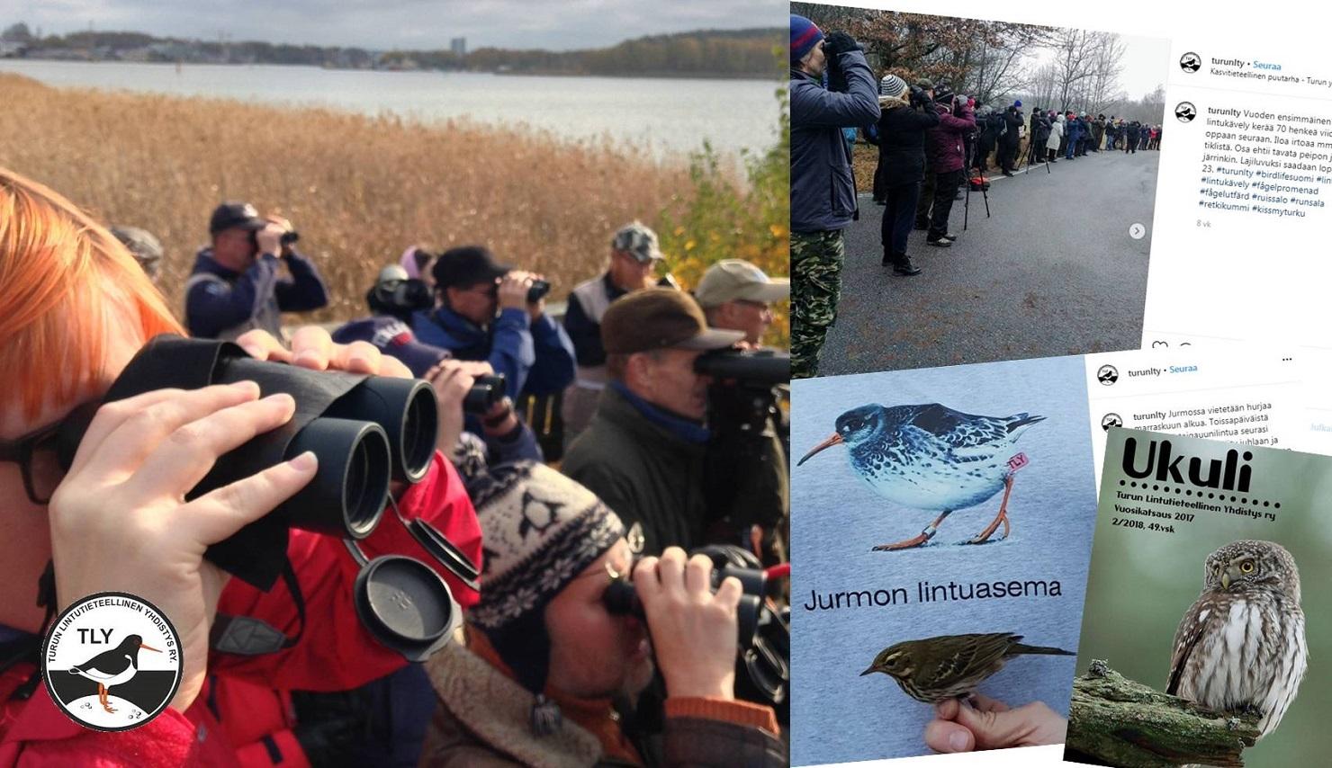 Vuoden lintuyhdistys 2020 on Turun Lintutieteellinen Yhdistys. Pääkuva: Kati Grönholm