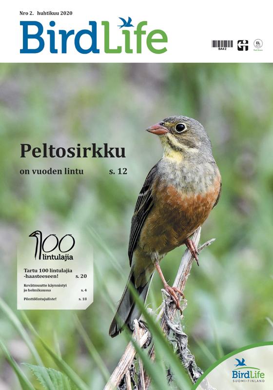 BirdLife-lehti 2/2020 kansi