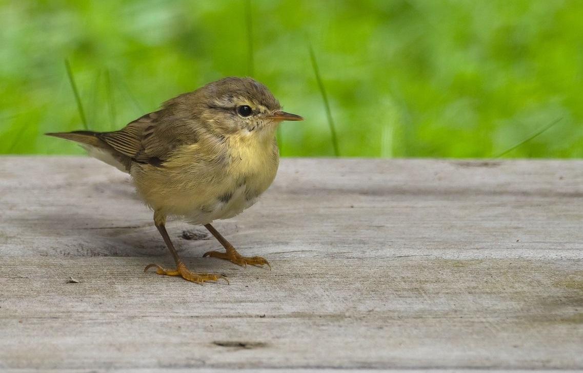 Birdlife Havainnot